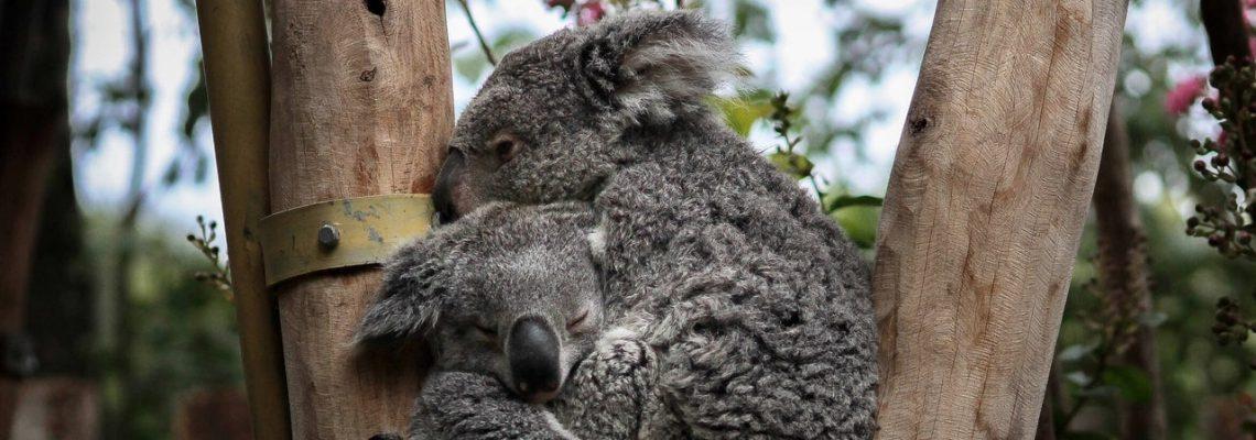 Contact Bearhugs For Australia